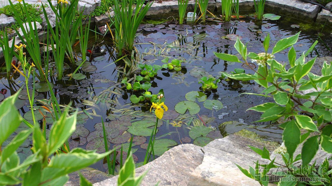 Bog garden plants pond fish water plants aquatic plants for Backyard pond plants and fish