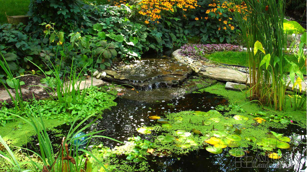 Bog garden plants pond fish water plants aquatic plants for Pond with plants