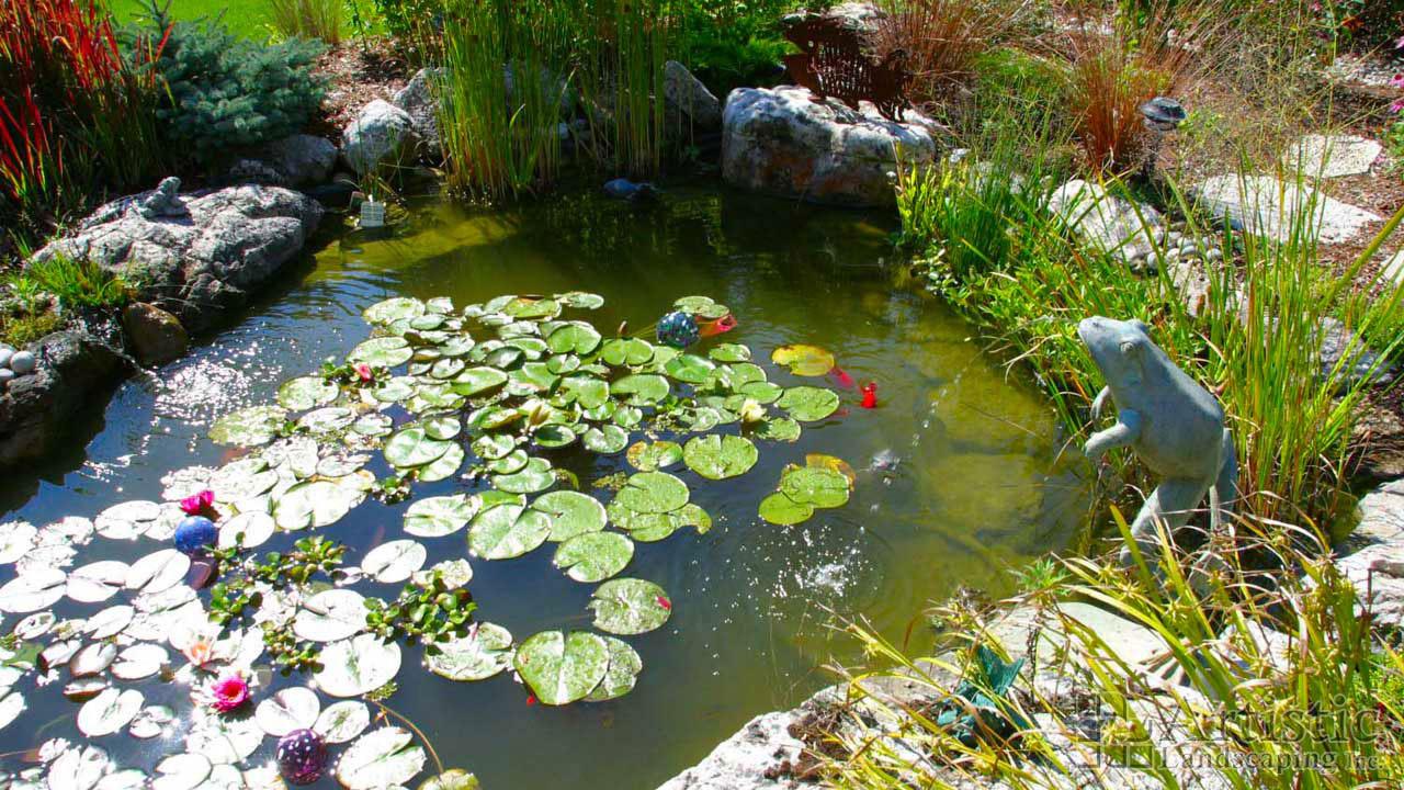 Bog garden plants pond fish water plants aquatic plants for Water plants for fish ponds