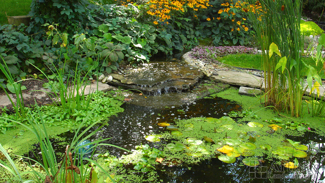 Garden ponds small to large size custom ponds kitchener for Large pond plants
